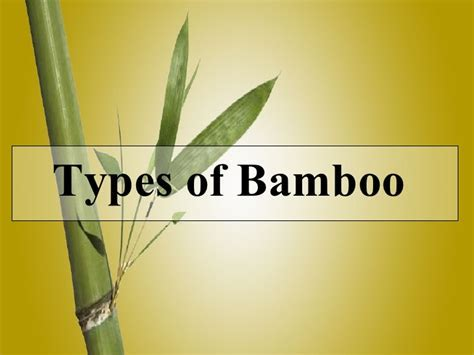 Types Of Bamboo