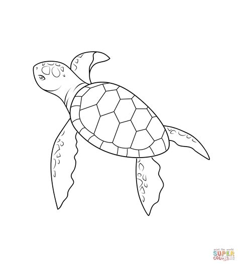 what color is a turtle baby turtle coloring page free printable coloring pages