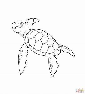Ausmalbild: Baby Schildkröte | Ausmalbilder kostenlos zum ...
