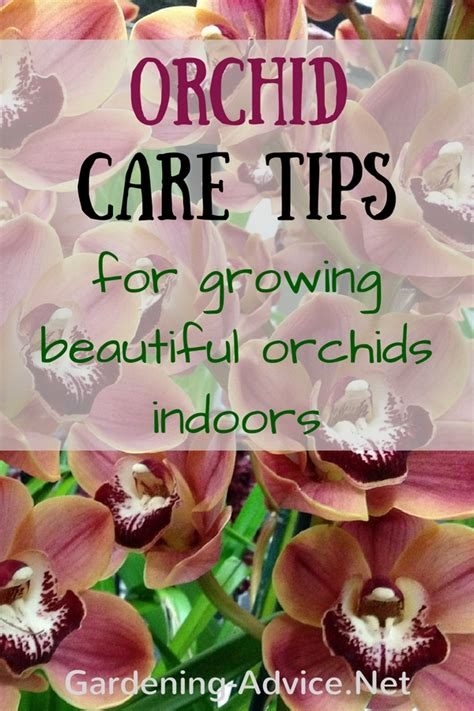 how do i care for an orchid after it blooms growing orchids indoors orchid care instructions and tips