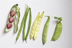 Types Of Bean Plants To Grow