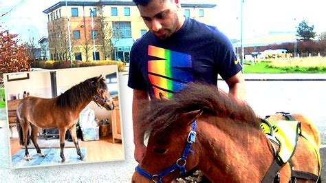 horse guide blind afraid dogs mohammed digby responsibility salim patel says looking