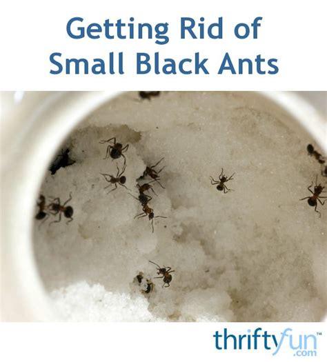 rid  tiny ants  bathroom   small