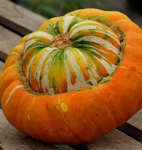squash vegetable how to identify squash different squash types you didn t know about