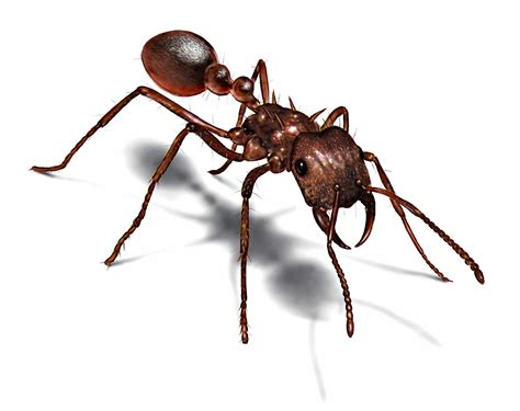 garlic  cinnamon   rid  ants   build