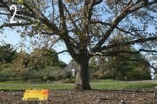 art  trees trail
