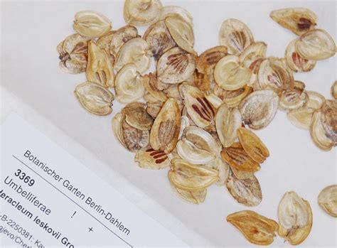 Botanischer Garten Berlin Herbarium by Pflanzenmaterial Bgbm
