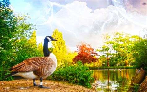 best interior designs for home swan bird near lack beautiful nature hd wallpapernew