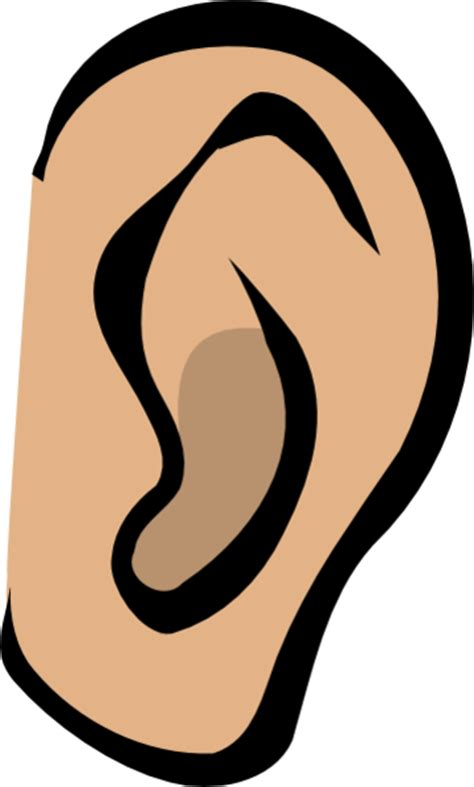cartoon ear clipart best