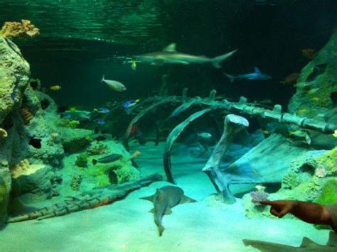 sea aquarium offers cool displays interactive geekmom wired