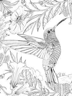 humming bird flower Coloring pages colouring adult