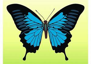 9  Butterfly Illustrations