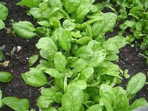 Quoi Planter En Automne : que planter en septembre 15 id es semer et 50 photos ~ Melissatoandfro.com Idées de Décoration