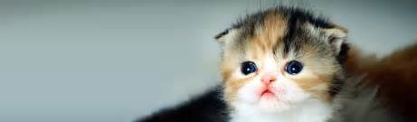 cats and kittens cats kittens free web headers