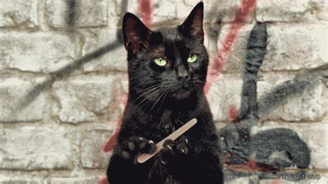 Unamused Cat Meme - nail file gifs find share on giphy