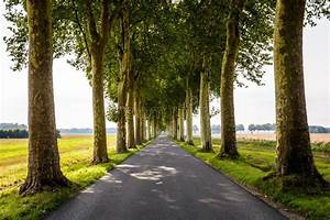 Tree Lined Country Lane - France Stock Image