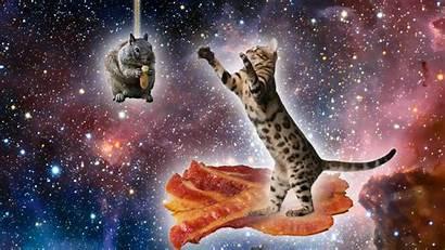 Cat Space Bacon Squirrel Imgur Reddit