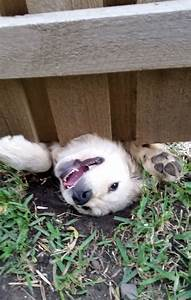 10 desperate dogs who just want to say hi bored panda for How to introduce a dog to a new dog