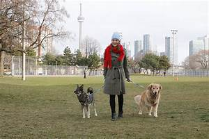 Walk My Dog Toronto New App-Based Service in Liberty Village