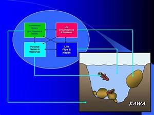 Introduction To The Kawa Model  Beki Dellow