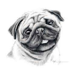 Pug Dog Pencil Drawing