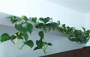 Pflanzen Für Drinnen : zimmerpflanzen mit e pflanzenfreunde ~ Frokenaadalensverden.com Haus und Dekorationen