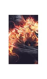 Worlds Best Wallpaper,Animal HD Wallpaper,2560x1440 HD ...