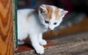 Funny Kitten Wallpaper Cute Baby Cats