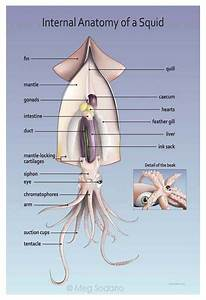 Pin By Serbin Communications  Inc  On Medical Illustration