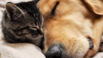dogs and cats cat and best friends hd wallpaper 187 fullhdwpp