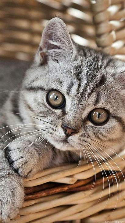 Cat Iphone Backgrounds 1080p Cats Wallpapers Kitten