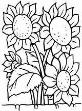 Sunflowers Coloring Flowers Borders Larger Adults sketch template