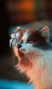Cute Cat Wallpapers HD For Mobile Phone - I Like Cats Very ...