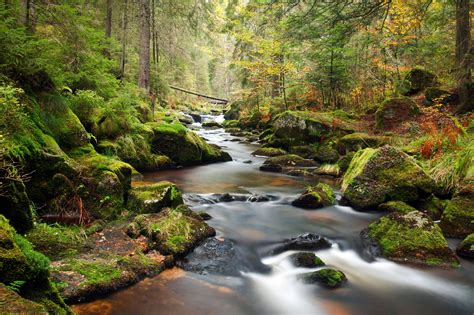 Forest River Background Wallpaper Hd Photos Rivers Nature