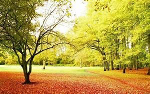 Beautiful Nature Background ·①