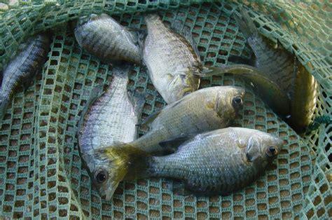 sport fish  lake stocking tank hollow fisheries