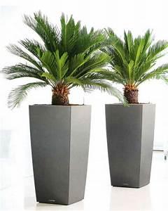 Palmen Für Die Wohnung : warum ist die deko palme so attraktiv ~ Markanthonyermac.com Haus und Dekorationen