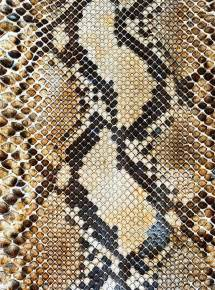 best 25 snake skin ideas on pinterest snake drawing
