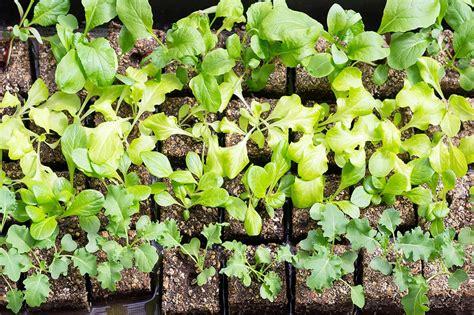 starting seedlings how to start seeds in soil blocks diy network blog made remade diy
