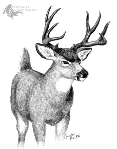 mule deer  sesroh  deviantart