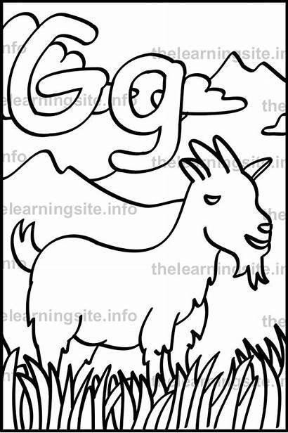 Letter Goat Outline Coloring Alphabet Sample Flashcard
