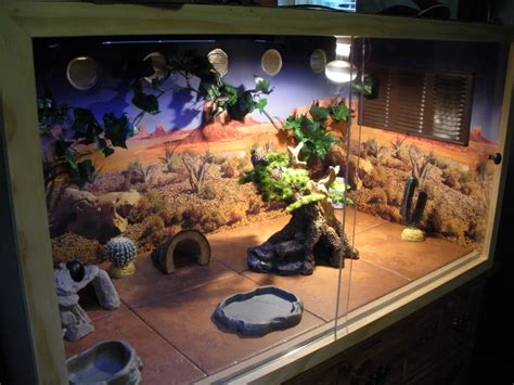 bearded terrarium decor image result for bearded tank decor bearded cages bearded