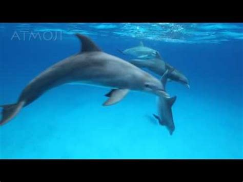 bottlenose dolphins youtube