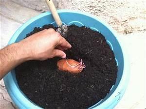 Culture De La Patate Douce : faire pousser patate douce sur balcon ~ Carolinahurricanesstore.com Idées de Décoration
