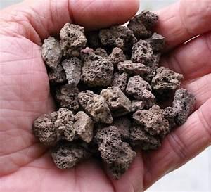 Bonsai Stecklinge Machen : vermehrung von acer palmatum var vegetative vermehrung ~ Indierocktalk.com Haus und Dekorationen