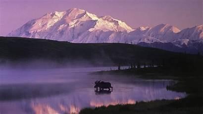 Alaska Backgrounds Wallpapers Moose Desktop Background Screensaver