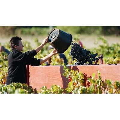 2016 Wine Harvest: France's ProvenceStirring the Lees