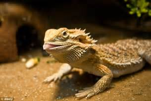 Dragon see, dragon do: Researchers find first evidence