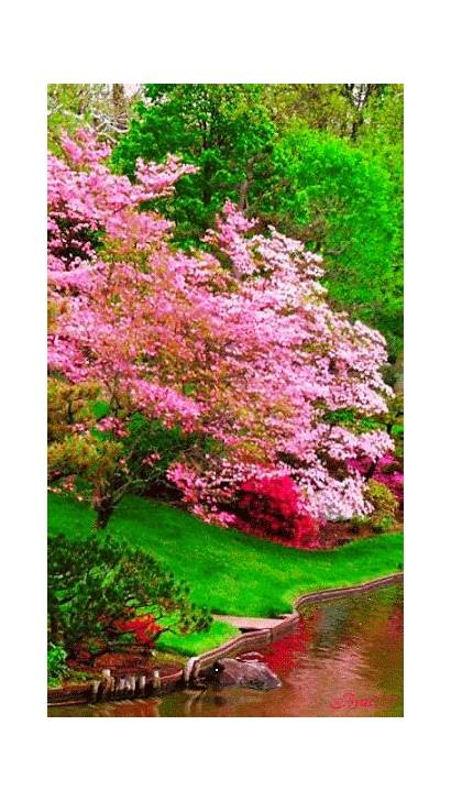 Nature Gifs Flowers Flower Growing Spring Trees