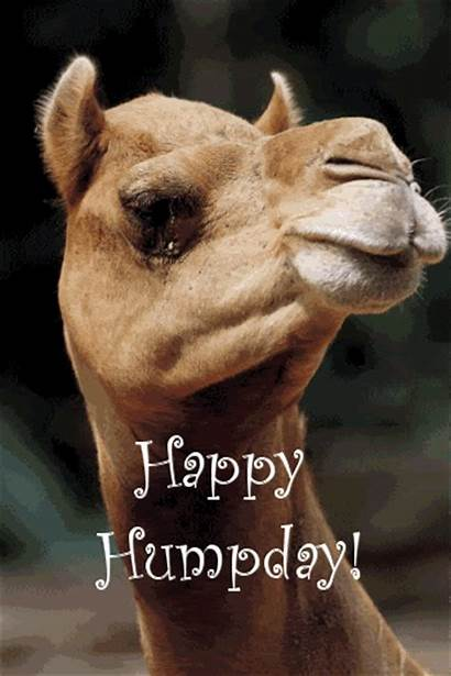 Camel Wednesday Quotes Hump Happy Naughty Graphic